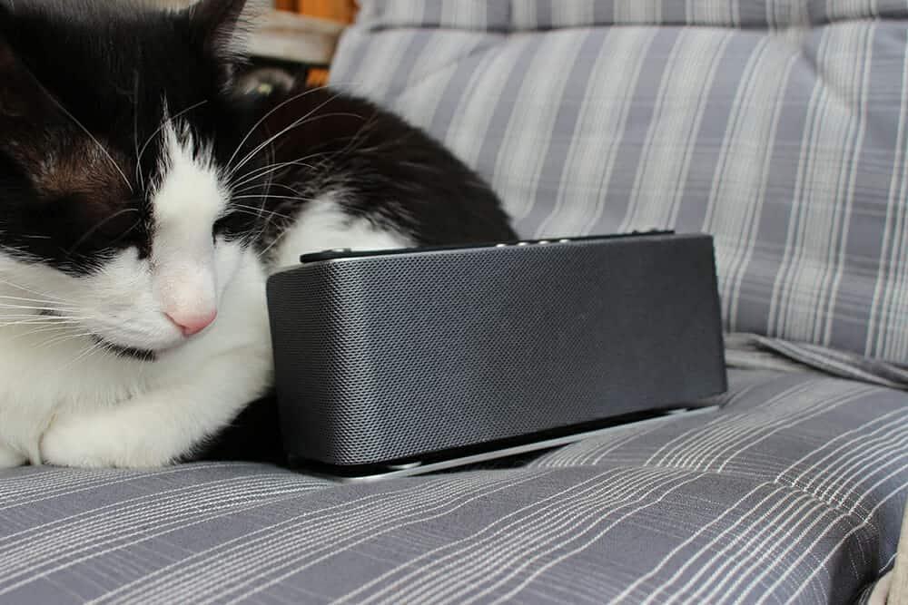 Neepho Sonority mit Katze